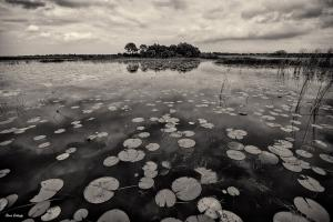 Florida Natural Legacy Show Features Gallogly Photo